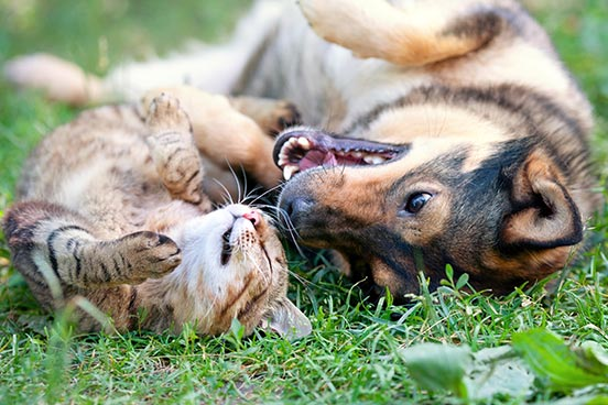 A dog and cat laying on their backs